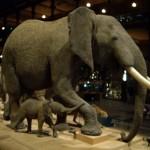 象からスタート。