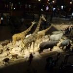 動物大行進3階から撮影。