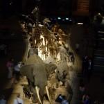 動物大行進3階の正面入り口側から撮影。