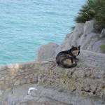 わたしは猛禽類より猫がきになりました。ここ、断崖絶壁と言ってもいいかも。