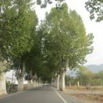 ロケタス・デマルからベルハという村を抜けてマイレナに向かいます。