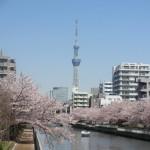 スカイツリーと桜。