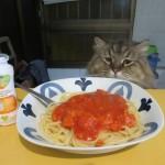 おまけの画像。パートナーが作ったトマテフリートにツナ缶のパスタ。