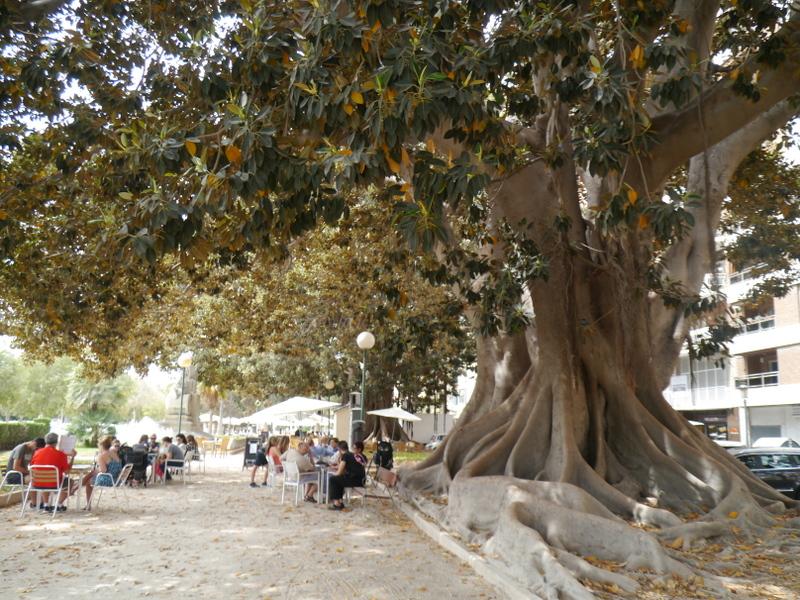 街路樹も大きい。