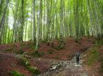 イラティの森。